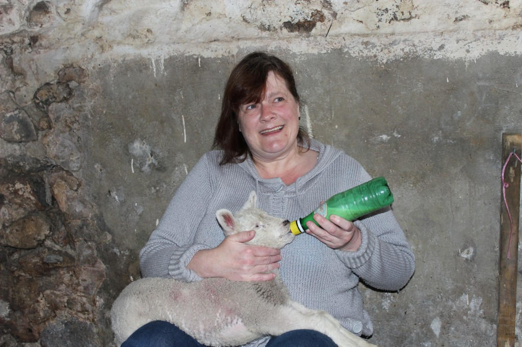Tina bottle feeding lamb