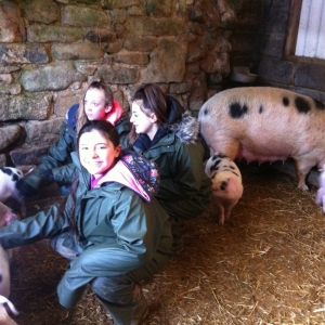 Meeting the piglets